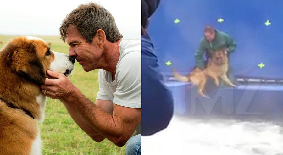 """""""Quatro Vidas de Um Cachorro"""": Após vídeo de maus-tratos, pré-estreia do filme é cancelada"""