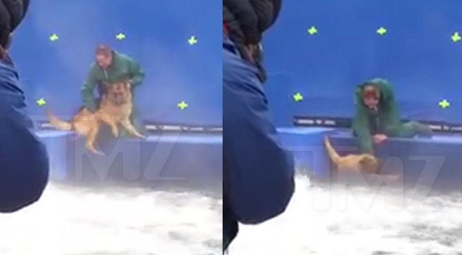 """Vídeo mostra maus-tratos a pastor alemão nas gravações de """"4 Vidas de Um Cachorro"""""""