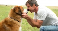 Film Title: A Dog's Purpose